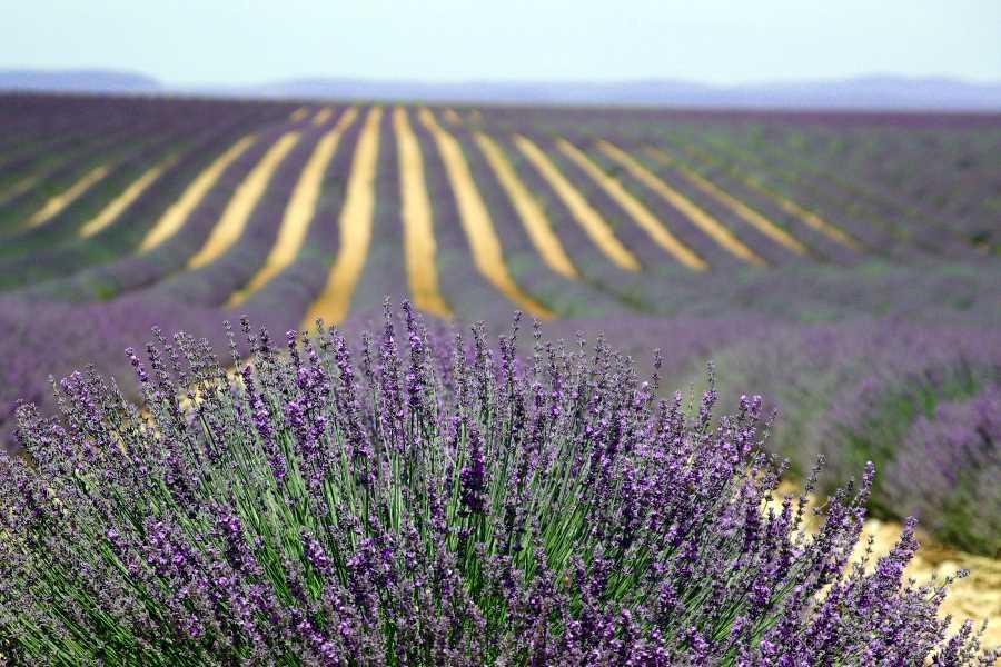 La Provence en hiver