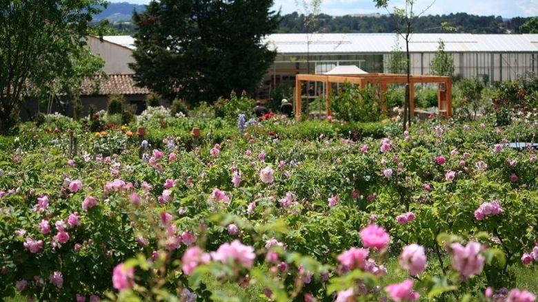 Ce jardin constitue le conservatoire de plantes à parfum du musée, un espace naturel témoin du paysage olfactif lié à l'agriculture locale. / © MIP