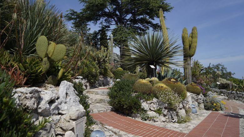 Le Jardin botanique d'Eze (Alpes-Maritimes) présente une collection de plantes méditerranéennes sur sa face nord et des cactées et des succulentes sur sa face sud. / © FTV/L. B.