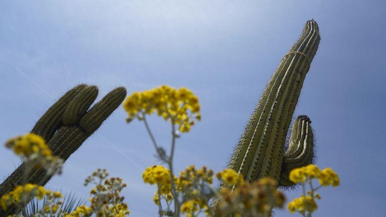 Le Jardin botanique d'Eze a rouvert ses portes. / © FTV/L. B.