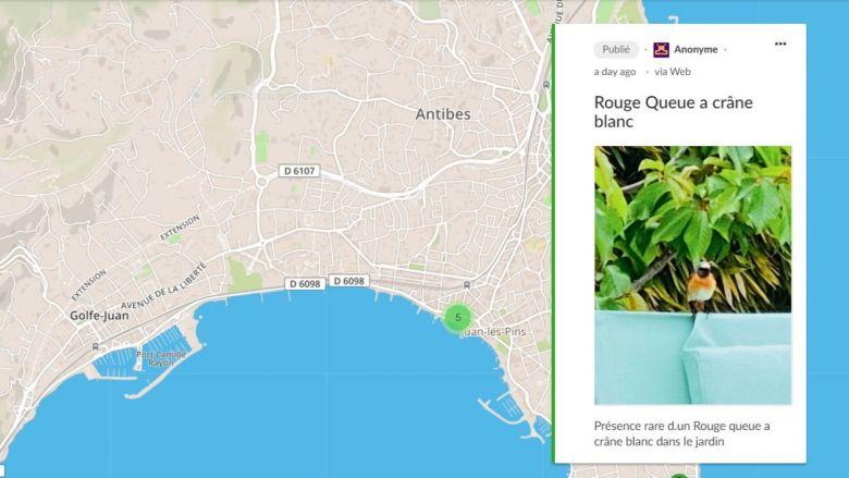 Un rouge-queue observé dans un jardin de Juan-les-Pins, à la faveur du confinement. / © Université Côte d'Azur